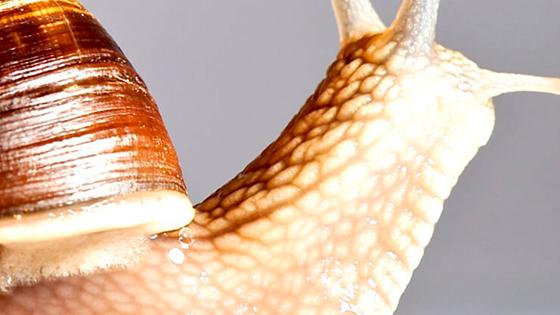 Слиз равлика: кращі креми з муцином равлика